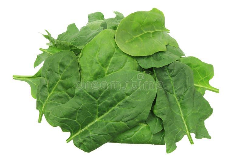 Download Stapel der Spinat-Blätter stockbild. Bild von organisch - 27727605
