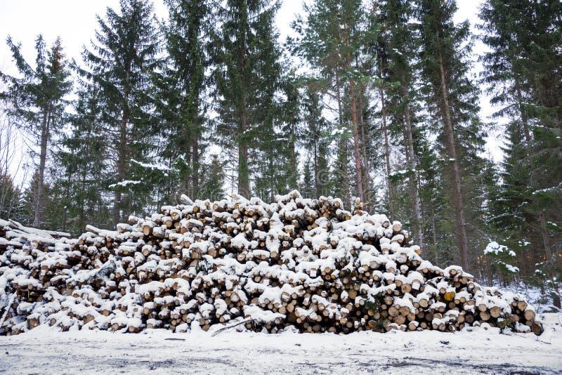 Stapel des Bauholzes lizenzfreie stockbilder