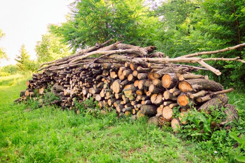 Stapel des Brennholzes im Wald stockbild