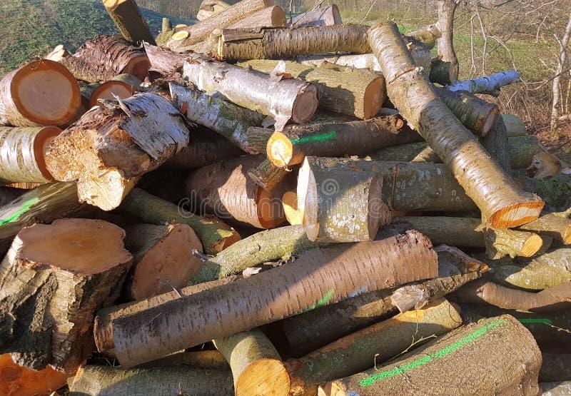 Stapel des gehackten Holzes von den Bäumen stockfotografie