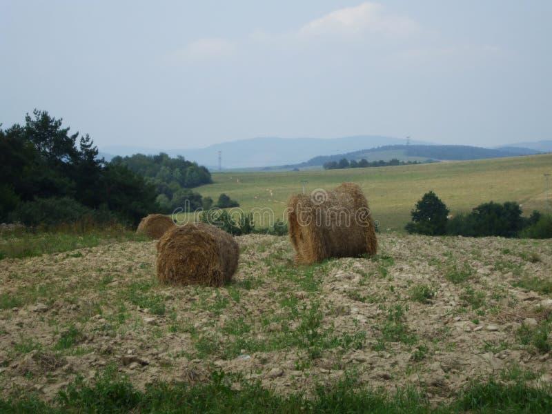Stapel des Strohs auf einem Feld vor Wald lizenzfreies stockfoto