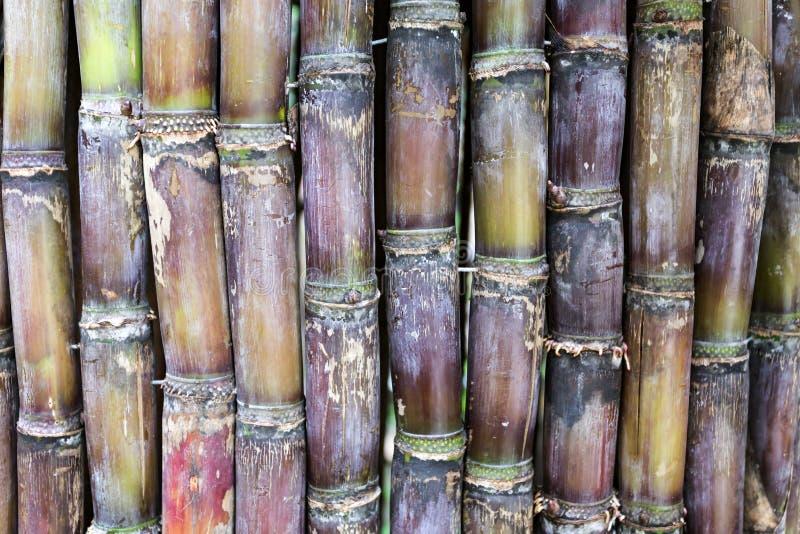 Stapel des Zuckerrohrs lizenzfreies stockfoto
