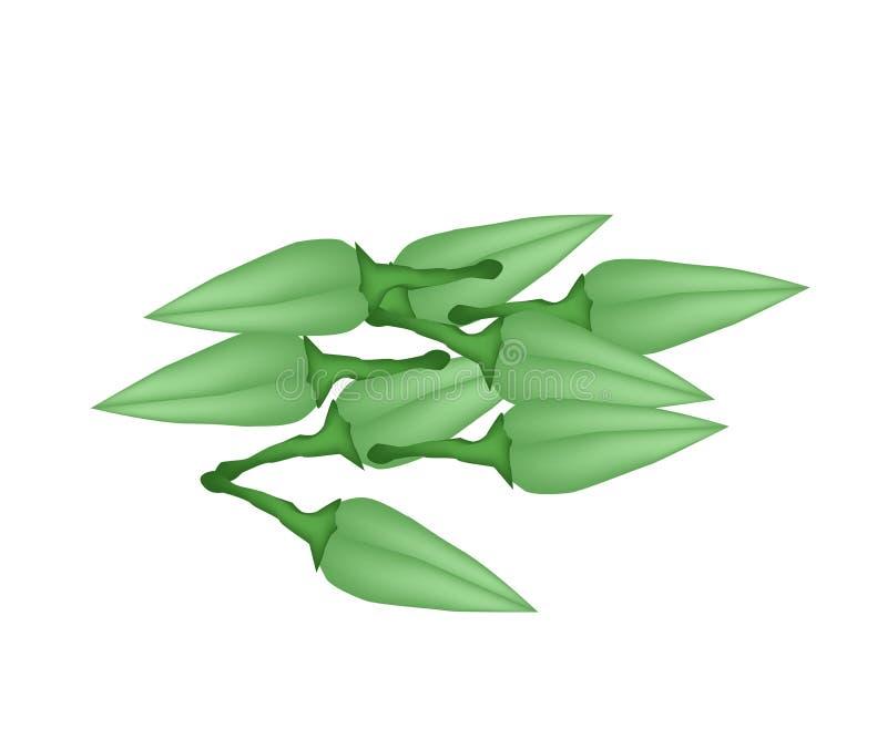 Stapel frische Zucchini-Blüten stock abbildung