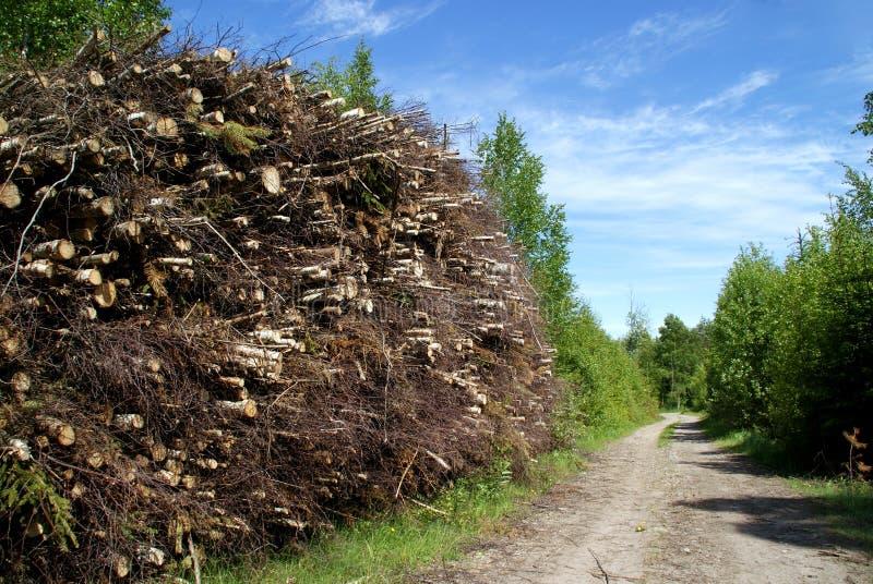 Stapel hölzerner Kraftstoff durch Waldweg lizenzfreies stockbild