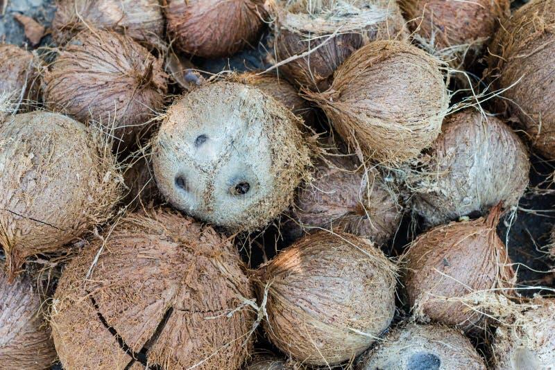 Stapel haarige braune Kokosnüsse lizenzfreie stockfotos
