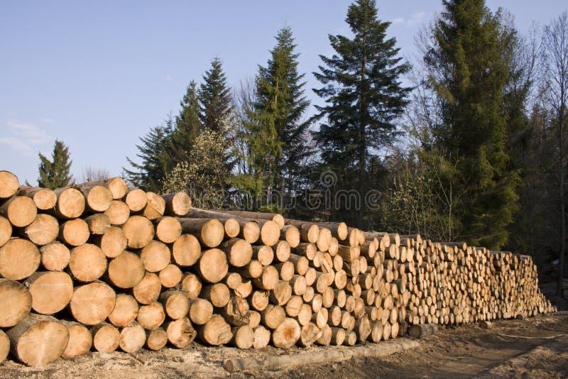 Stapel Kieferholz im Wald stockfotografie