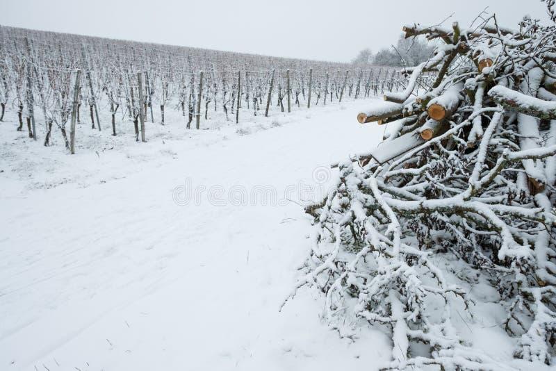 Download Stapel Niederlassungen In Einem Weinberg Mit Schnee Stockbild - Bild von eintragfäden, weinberg: 90235613