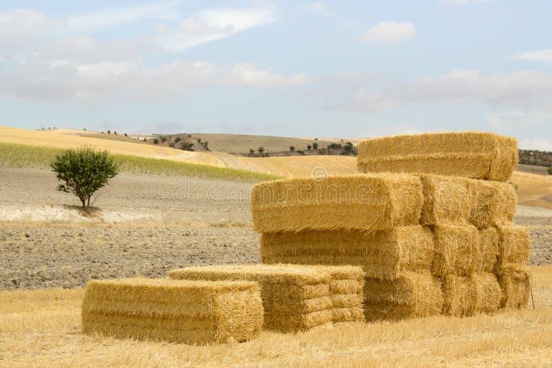 Stapel Strohballen in einer sonnigen Landschaft lizenzfreie stockfotografie