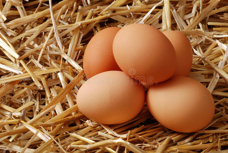 Stapel van bruine eieren in stro stock afbeelding