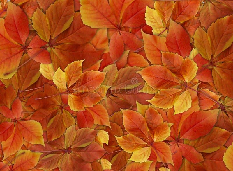 Stapel van de kleurrijke achtergrond van dalingsbladeren stock foto's