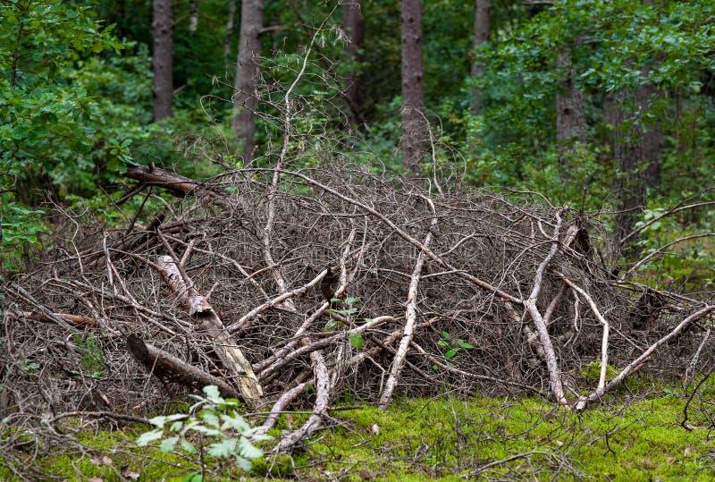 Stapel van Droge Takken in Forest Lithuania royalty-vrije stock foto