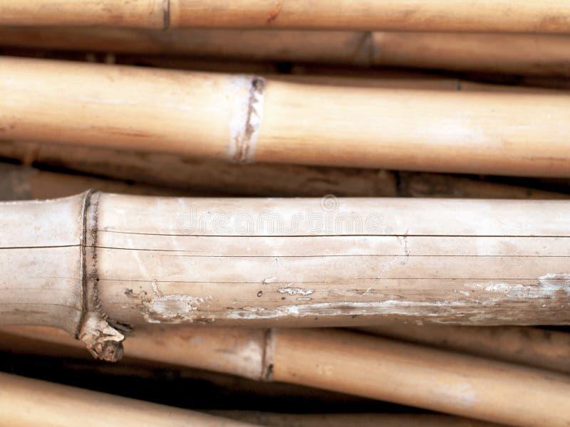 Stapel van droog bamboe stock afbeeldingen