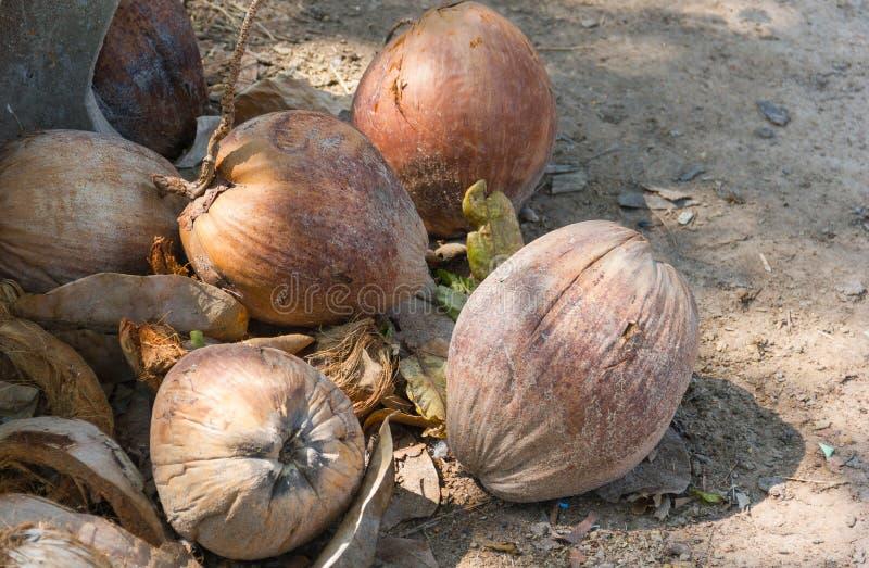 Stapel van Droog kokosnotenfruit stock foto's