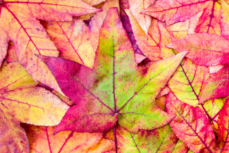Stapel van esdoornbladeren in dalingskleuren royalty-vrije stock afbeelding