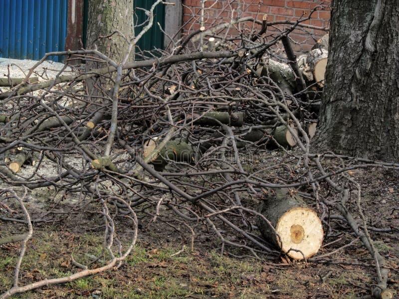 Stapel van gesneden takken en kastanjeboomstammen ter plaatse, na proces van de pollarding bomen De lente het snoeien van bomen v stock foto's