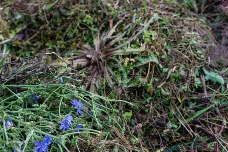 Stapel van het tuinieren afval met gras en oude bloemen stock foto's