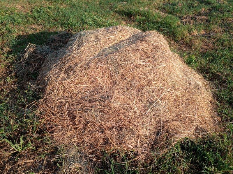stapel van hooi onder het groene gras stock foto