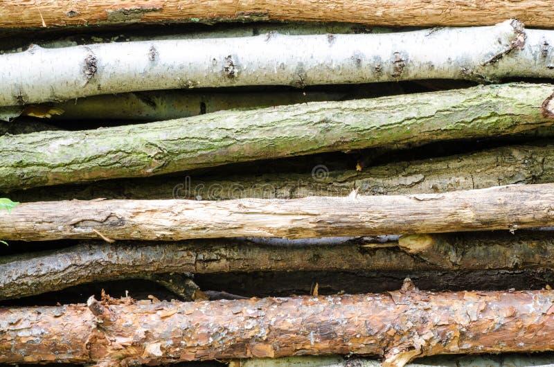 Stapel van hout in bos stock afbeelding