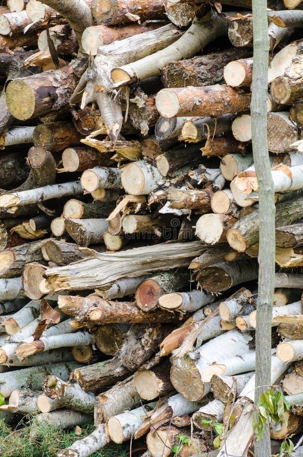 Stapel van hout in bos stock fotografie
