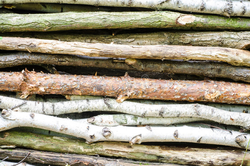 Stapel van hout in bos royalty-vrije stock fotografie