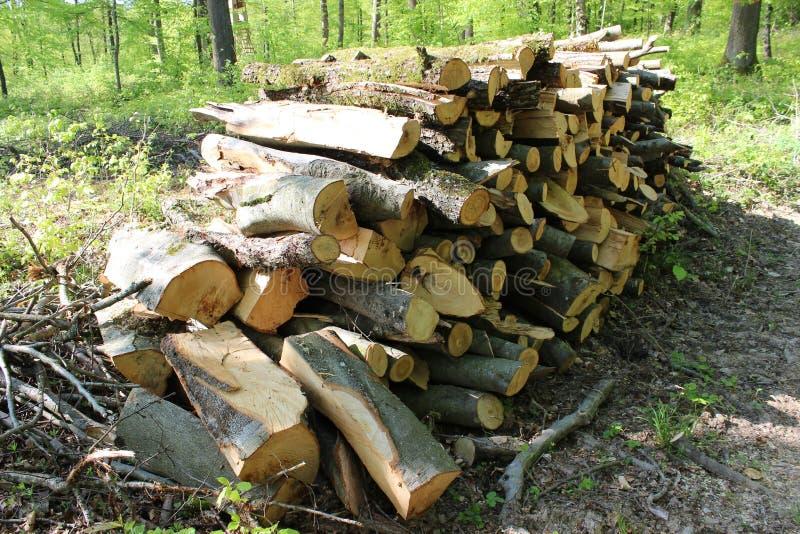 Stapel van hout in bos royalty-vrije stock afbeelding