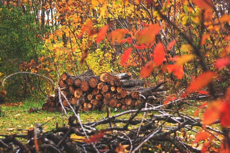Stapel van hout in de herfst boslandschap Hoop van besnoeiing en gestapeld royalty-vrije stock afbeelding