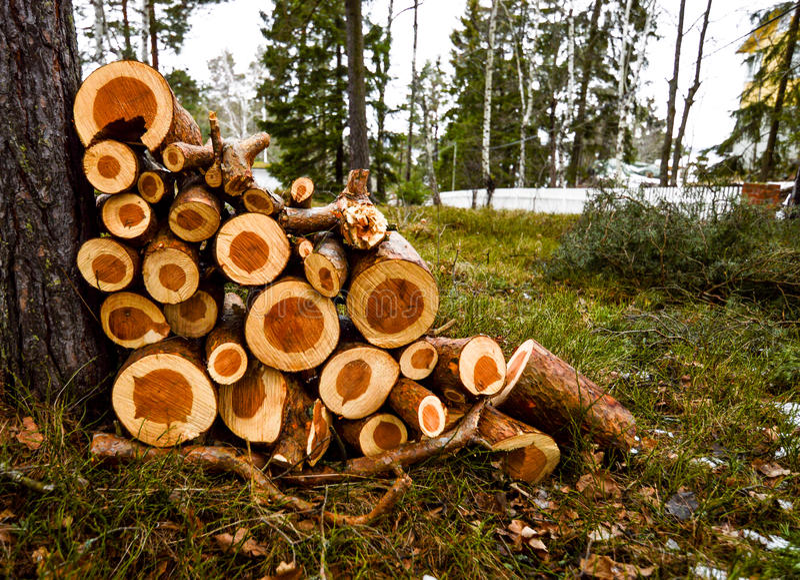 Stapel van hout in een bos royalty-vrije stock afbeelding