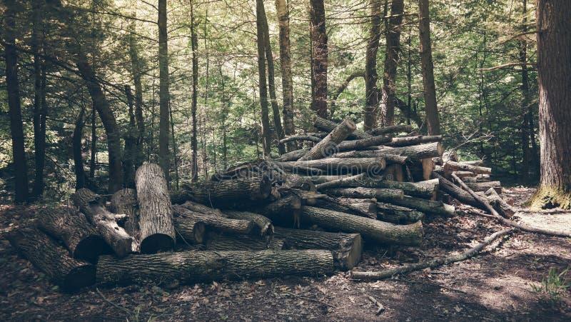 Stapel van logboeken royalty-vrije stock fotografie