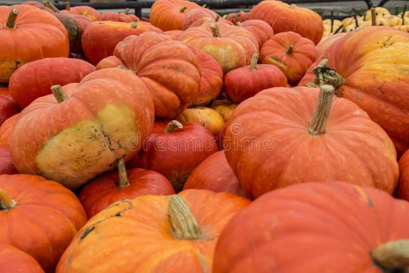 Stapel van oogst oranje pompoenen stock fotografie
