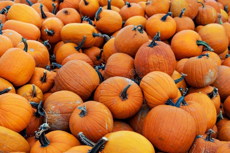Stapel van oranje verschillende groottepompoenen bij een pompoenstapel op een lokale eerlijke grond van Halloween stock afbeelding