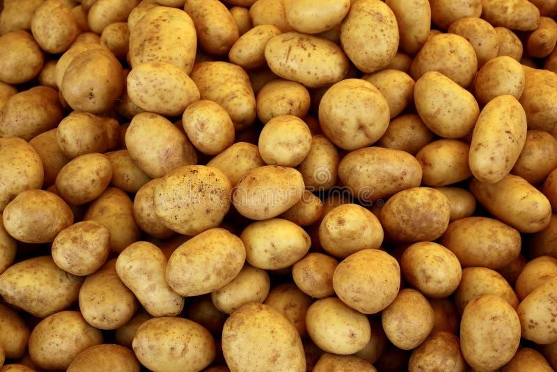 Stapel van ruwe aardappels royalty-vrije stock afbeeldingen