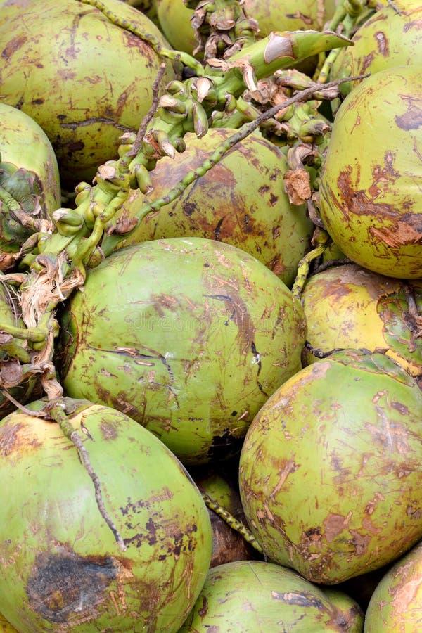 Kokosnoot met ruwe dekking