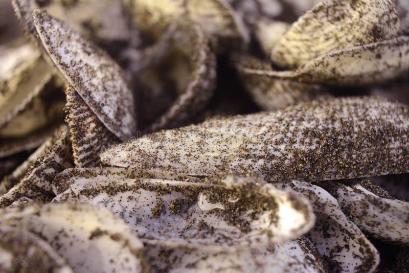Stapel van shells stock afbeeldingen