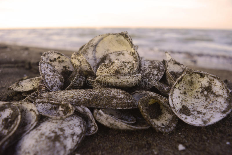 Stapel van shells royalty-vrije stock foto