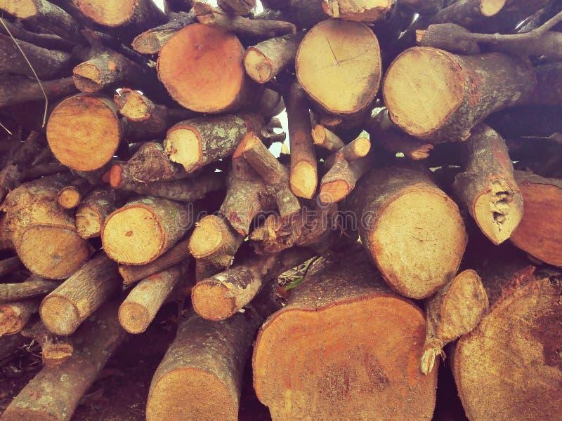 Stapel von den Klotz geschnitten in den Wald lizenzfreies stockfoto