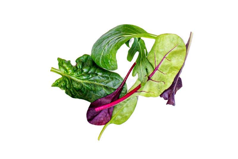 Stapel von den Salat-Blättern lokalisiert auf weißem Hintergrund Grüner Salat mit Arugula, Kopfsalat, Mangoldgemüse, Spinat und r lizenzfreie stockfotografie