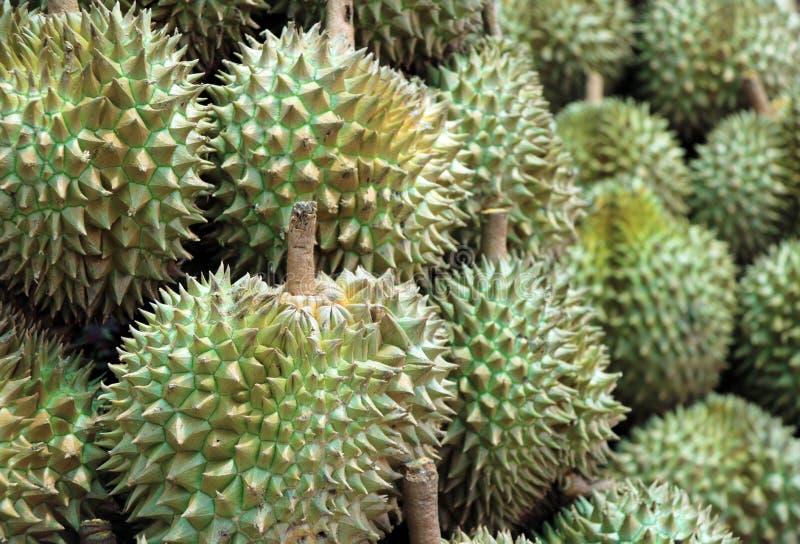 Stapel von Durian, eine ovale stachelige tropische Frucht, die eine sahnige Masse enthält stockbilder