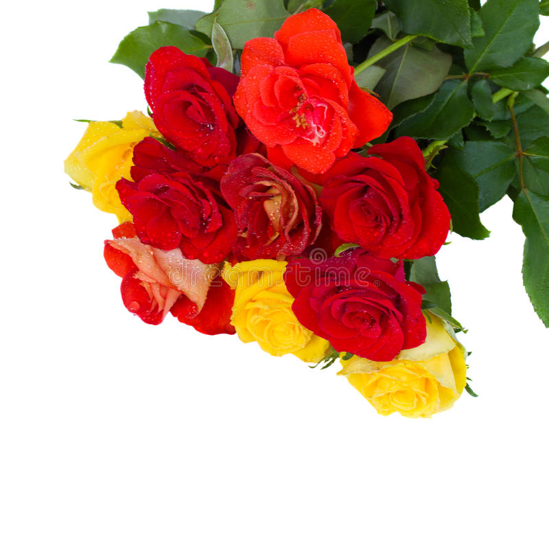 Stapel von frischem   Gartenrosen stockbild