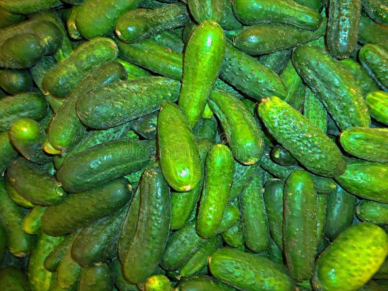 Stapel von frischen Gurken der neuen Ernte lizenzfreies stockfoto