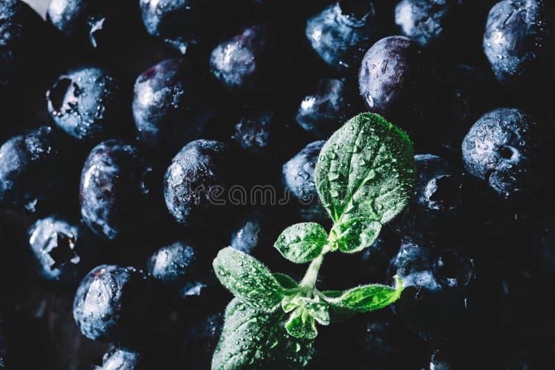 Stapel von frischen saftigen Blaubeerfrüchten und von nassen grünen Blatt lizenzfreies stockfoto