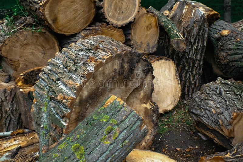 Stapel von hölzernen Klotz Schneiden Sie Bäume lizenzfreie stockfotografie