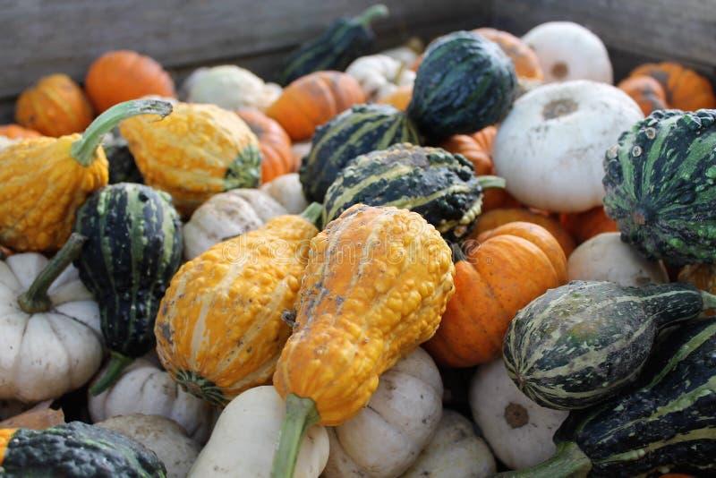 Stapel von Kürbissen und von Mini Pumpkins lizenzfreies stockfoto