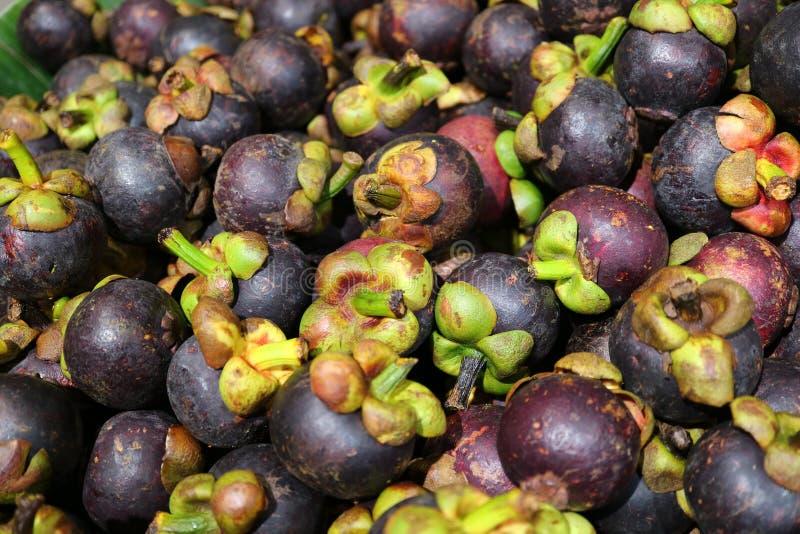 Stapel von reifen purpurroten Mangostanfrucht-Früchten mit grünen Stämmen für Hintergrund stockfotos