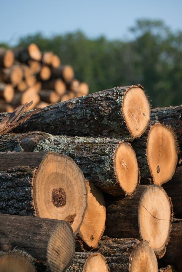 Stapel von Staplungs- aufgezeichneten Bäumen vom Gouverneur Knowles State Forest in Nord-Wisconsin - DNR hat Arbeitswälder, die h lizenzfreies stockfoto