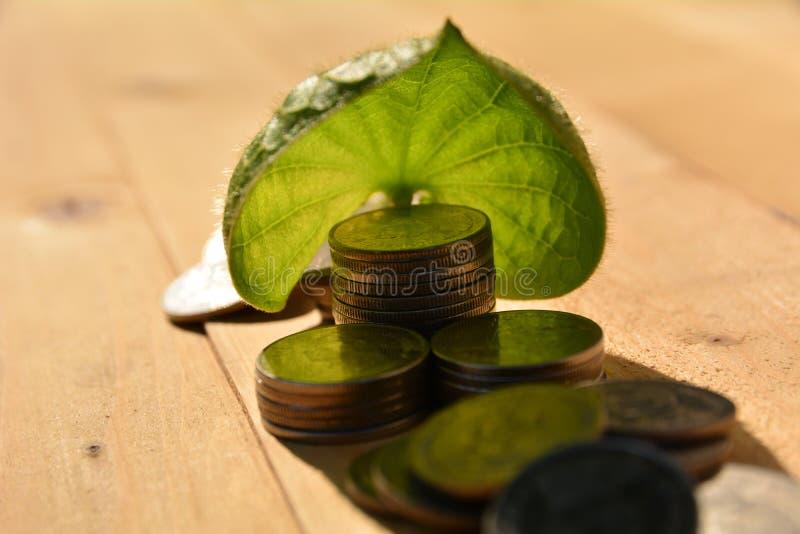 stapelmuntstukken gezet naast bladeren voor sparen geld en financieel, belasting stock afbeeldingen