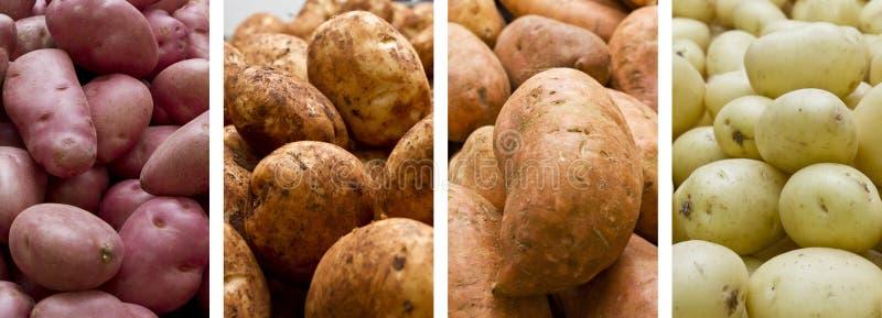 Stapels van aardappels royalty-vrije stock afbeelding