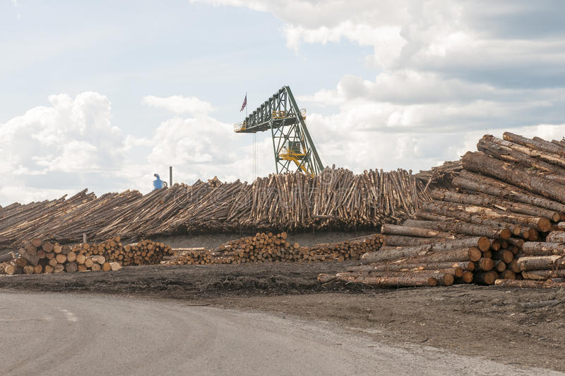 Stapels van bomen bij timmerhoutmolen stock afbeelding