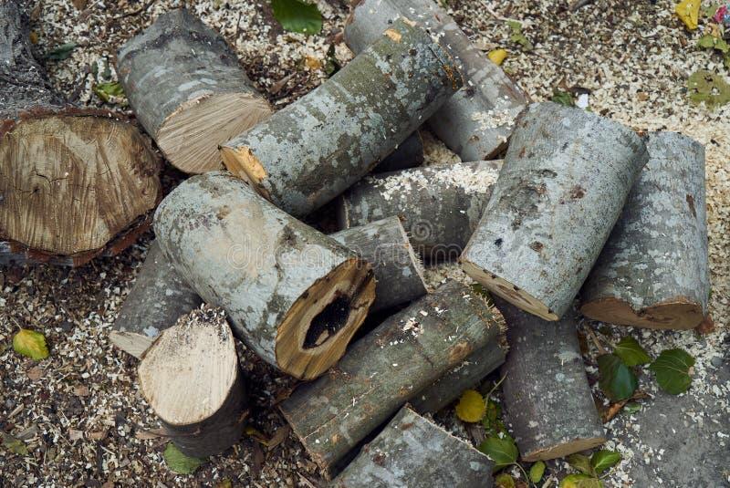 Stapels van brandhout in het bos, close-up royalty-vrije stock foto's