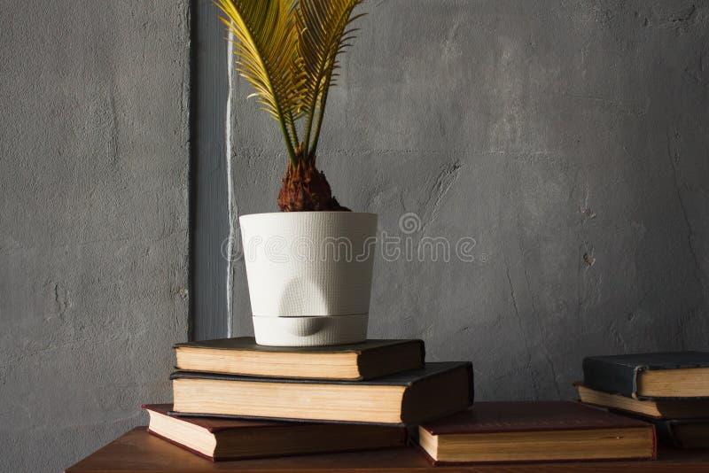 Stapels van oude boeken en een bloem in een pot royalty-vrije stock foto's