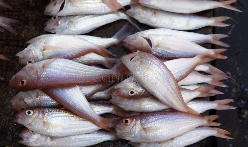 Staplad fisk på marknaden för stenstadfisk royaltyfria foton